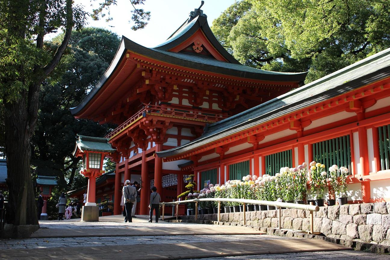 氷川神社と菊の花