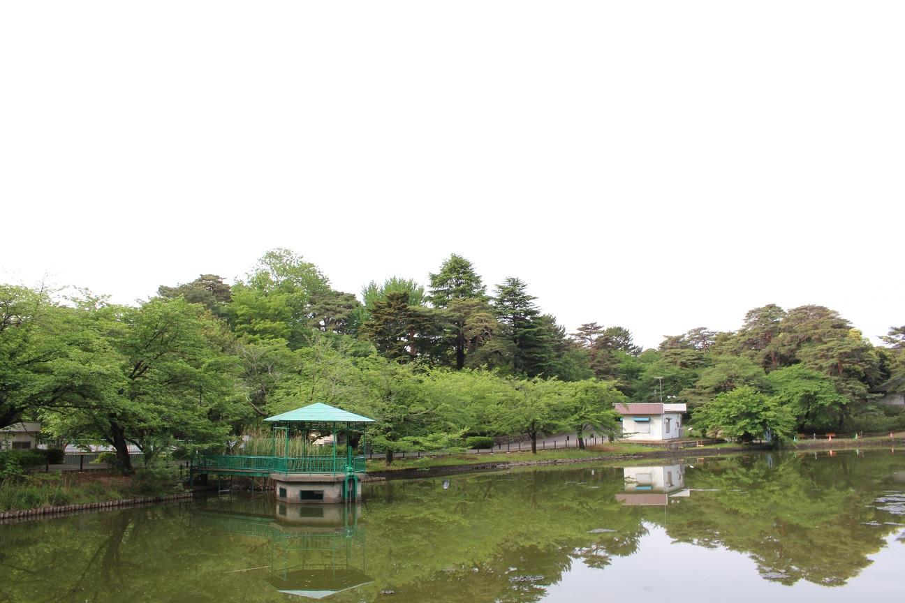 大宮公園ボート池(2015/5/12)②