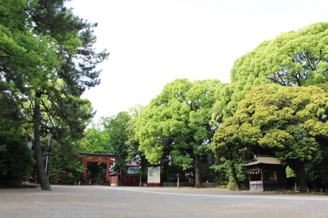 氷川神社の初夏