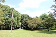 埼玉百年の森