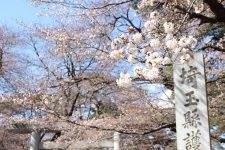 桜開花情報(3/23)