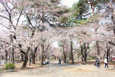 桜開花情報(3/25)